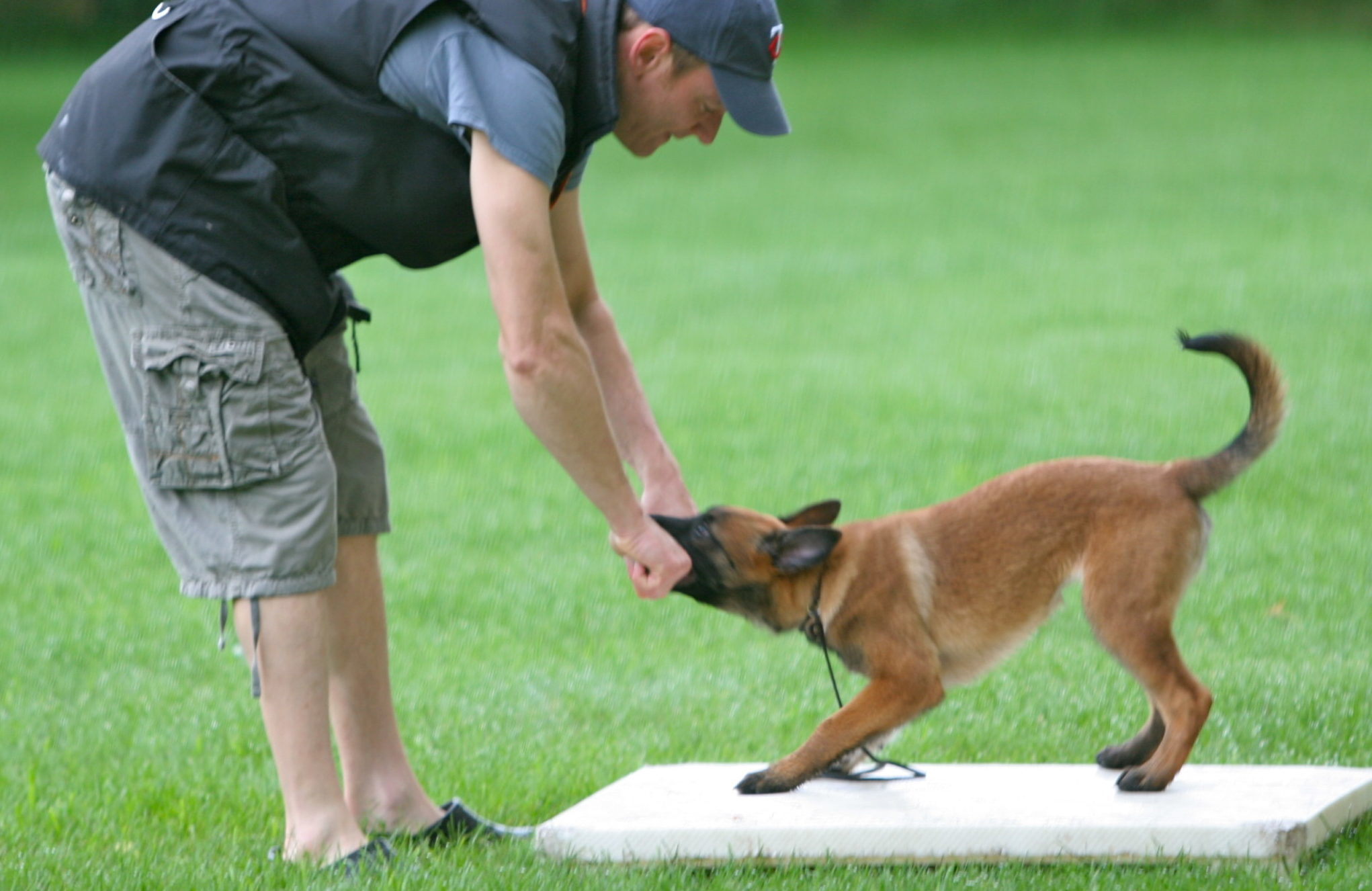 Marker training: The game changer in all of dog training