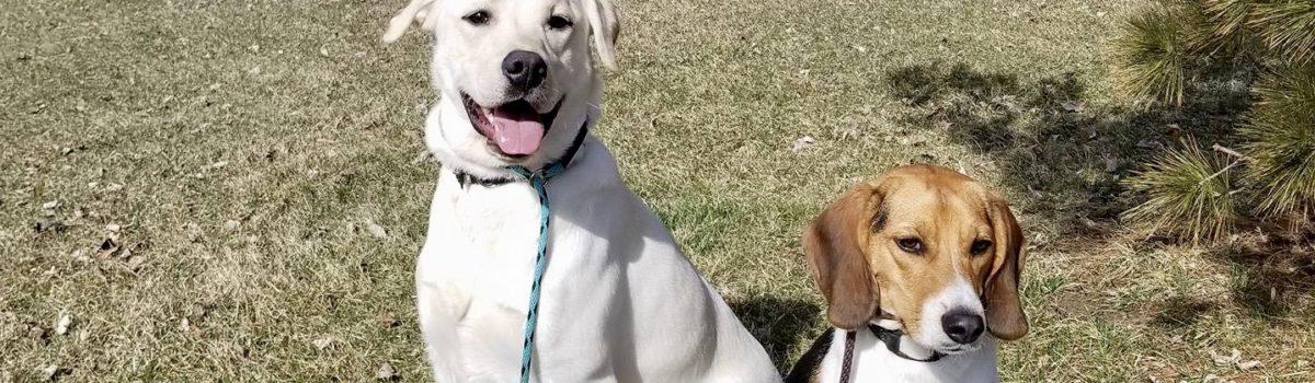 The 3 Cs of dog training