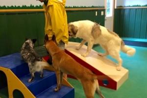 dog-boarding-3