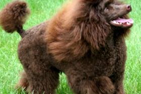 dog-in-grass