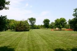 dog-training-field