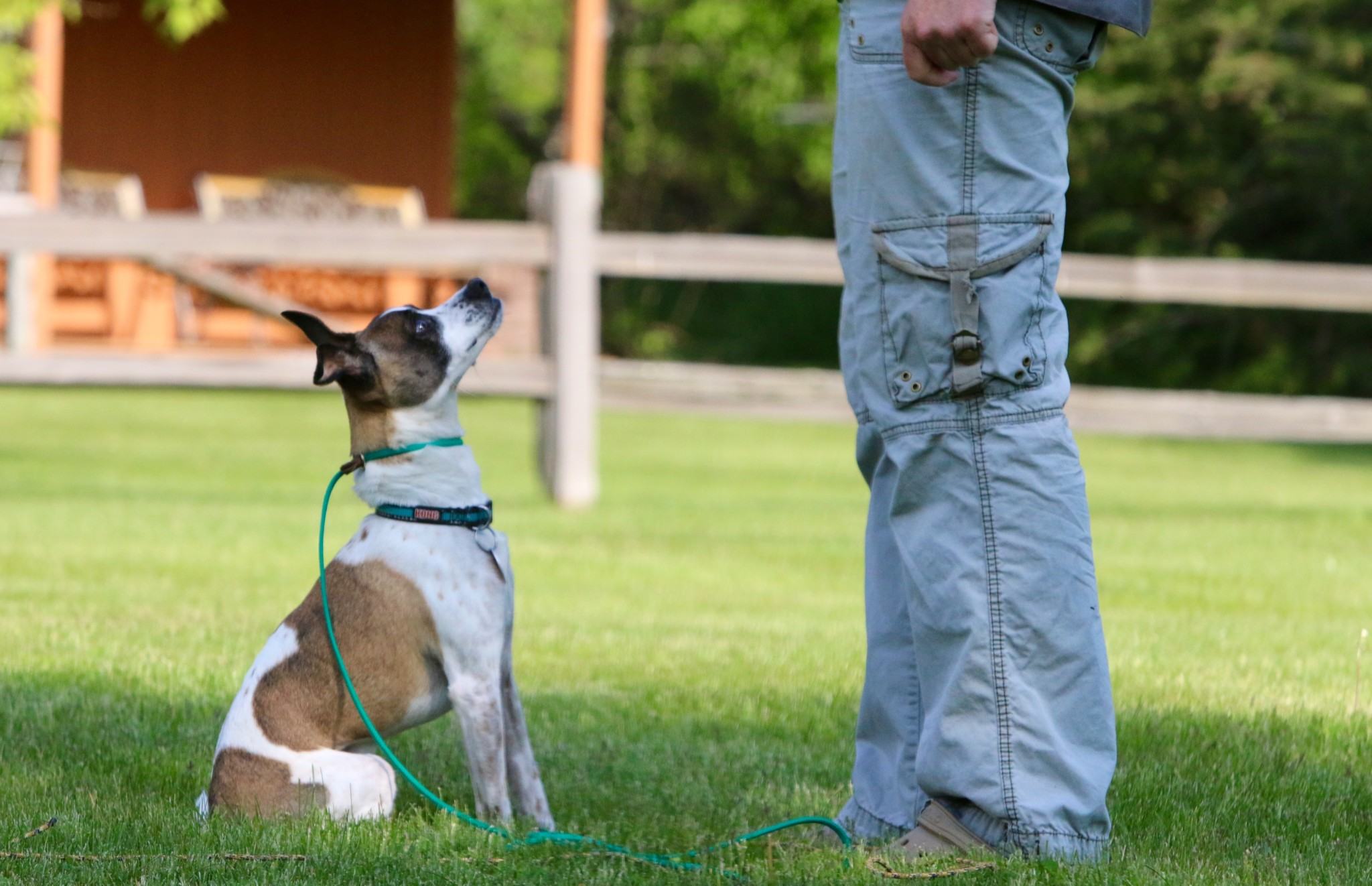 5 keys to a successful dog training session