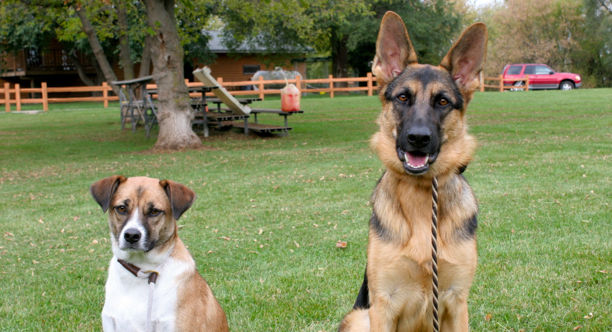 Can you manage bad behavior with obedience training?